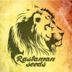 graines féminisées Rastaman Seeds