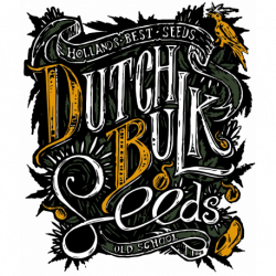 Graines cannabis féminisées Dutch Bulk Seeds