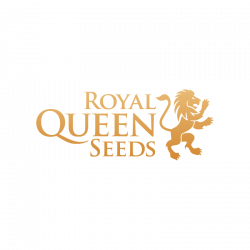 Graines cannabis automatique Royal Queen Seeds