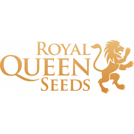 Graines cannabis féminisées Royal Queen Seeds