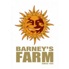 Vanilla Kush Barney's Farm