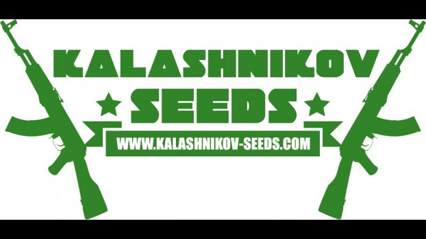 KALASHNIKOV SEEDS